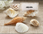 """Shells by the Sea"" Authentic Shell Placecard Holders with Matching Placecards baby favors"
